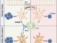 The Microbiome Controls Immune System Fitness | Charité - Un ...