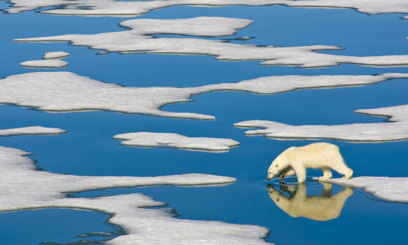 A polar bear in the arctic wilderness of the Svalbard Islands in the Arctic Ocean. Photograph: Ralph Lee Hopkins/Corbis