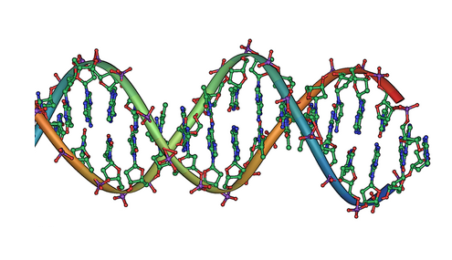DNA double helix. Credit: public domain