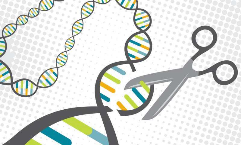 A CRISPR protein targets specific sections of DNA and cuts them. Scientists have turned this natural defense mechanism in bacteria into a tool for gene editing. Credit: Jenna Luecke and David Steadman/Univ. of Texas at Austin  Read more at: https://phys.org/news/2017-06-technique-enables-safer-gene-editing-therapy.html#jCp